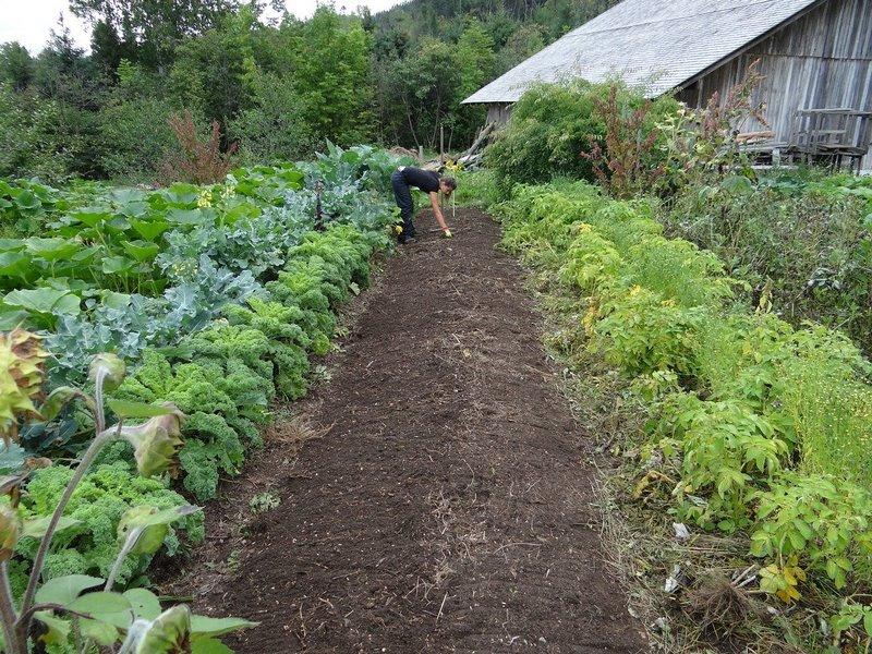 come organizzare l'orto